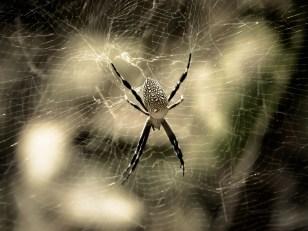 Araignée soignée