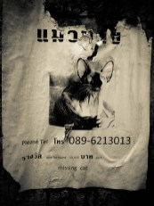 Missing pretty cat © Topich