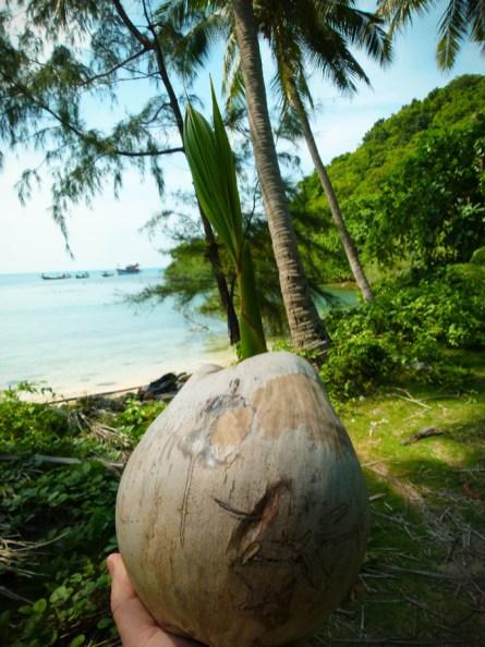 Germe de coconut © Topich