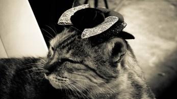 Le chat posé © Topich