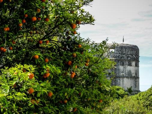 L'oranger © Sandy