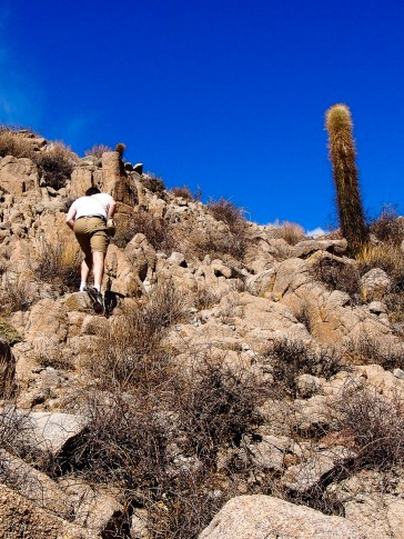 Beufa à la conquête du cactus