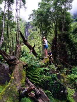 inside de jungle