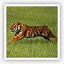 Tiger Temples Tour