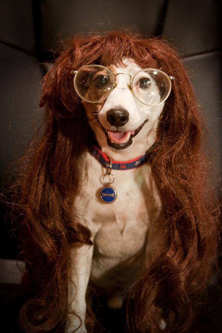 Russell Wigs Jack Terrier