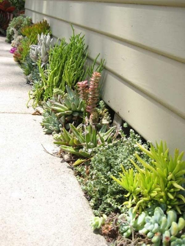 diy outdoor succulent garden