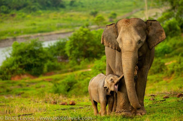 Image result for endangered species elephant