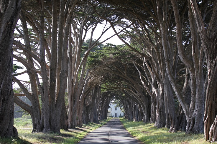 Top 10 Fascinating Tree Tunnels Across the World  Top Inspired