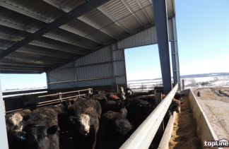 livestock building by topline steel buildings agricultural division