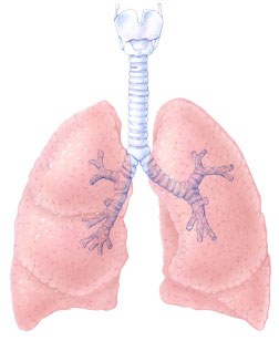 https://i0.wp.com/www.topnews.in/health/files/Lung.jpg