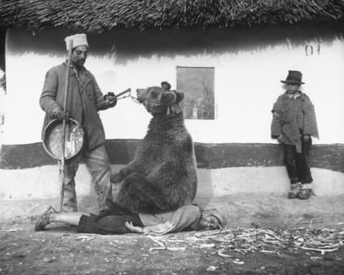 Лечение спины медведем. Румыния, 1946.