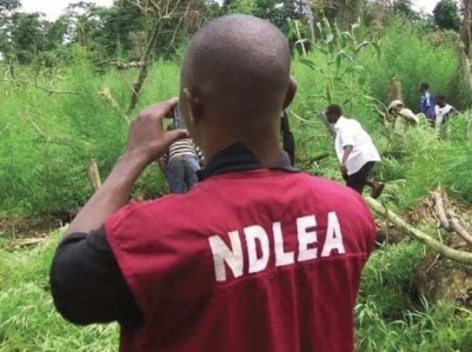 NDLEA Salary Structure
