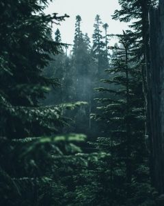 Breathtaking Moody And Mysterious Forest