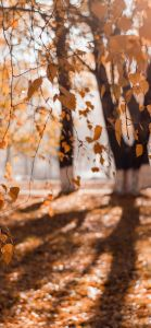 Fall Wallpapers for iPhone - FREE