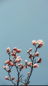 Spring Wallpapers Backgrounds Ideas for
