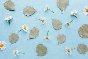 Top View Daisies And Leaves