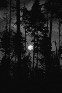 Dark forest, glow of the lake, an