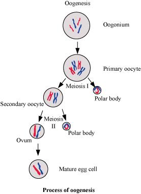 NCERT Class 12th Biology Solutions Chapter 3