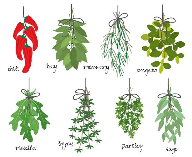 Tıbbi ve aromatik bitkiler