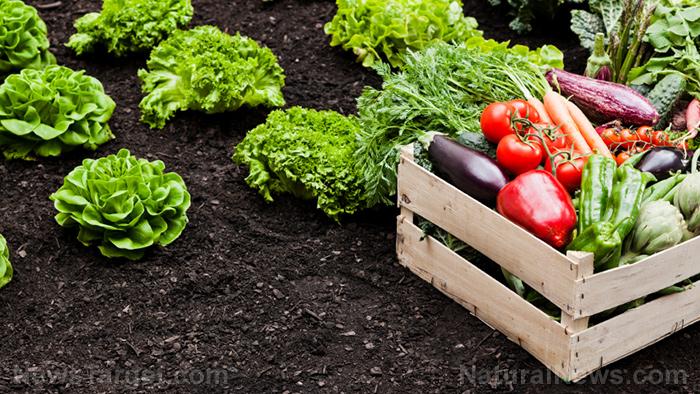Vegetables Organic Soil