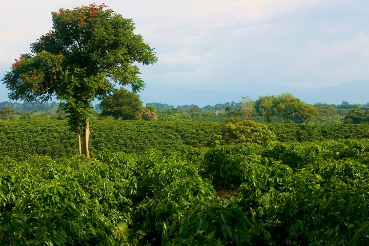 Coffee in Honduras - list of top coffee producing countries