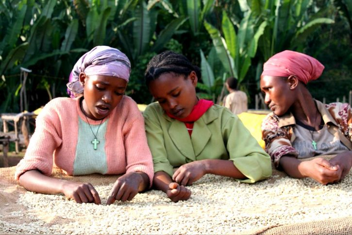 ethiopia-coffee-production