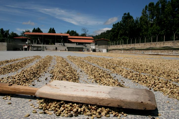 jacobos-board-for-drying-coffee-beans-at-finca-medina-in-guatemala