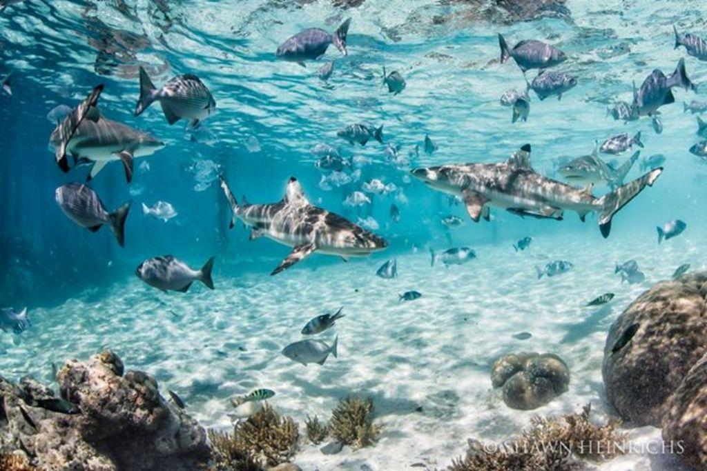 besten-unterwasser-fotos