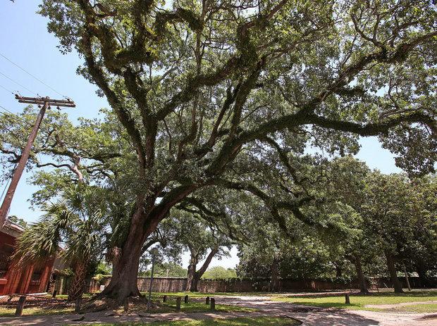 boyington-oak-tree