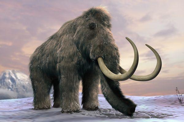 extinctanimals6