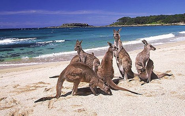 kangarooisland