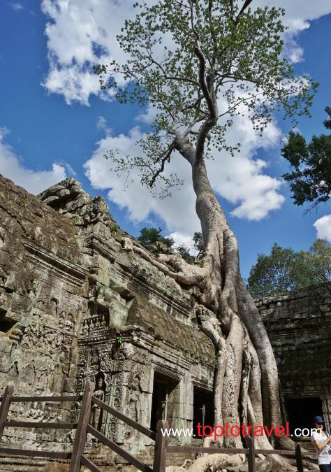 Ta Prohm@SiemReap20150701_131