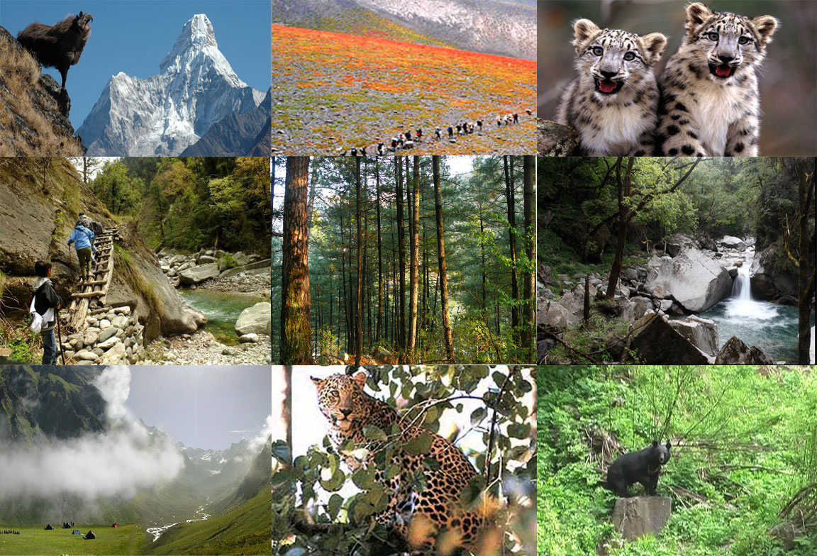 Image result for Great Himalayan National Park