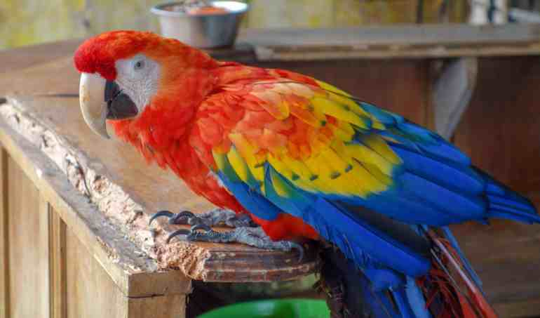 Casey the macaw from Jungla de Panama