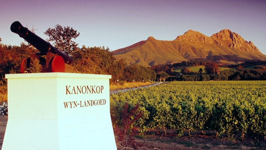 Kanonkop canon, vines, mountain - Foto01-Small - Copy (smaller)