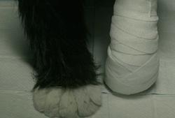 Paw-Paw's paws