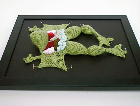 Knit Dissected Frog by aKNITomy