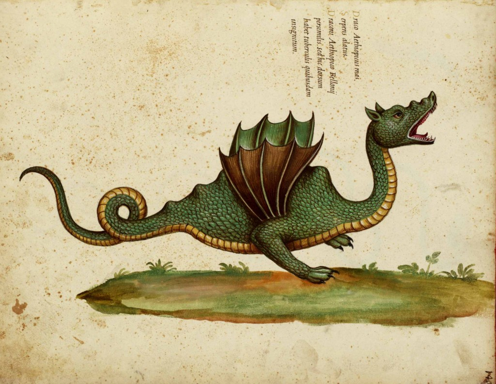 Picturing Dragons