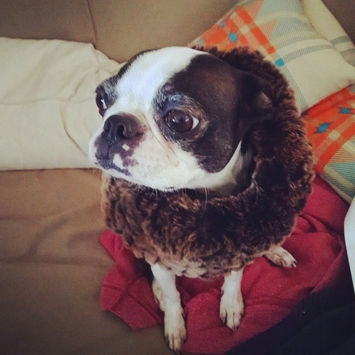 Pets-Dolce