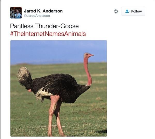 Thunder Goose