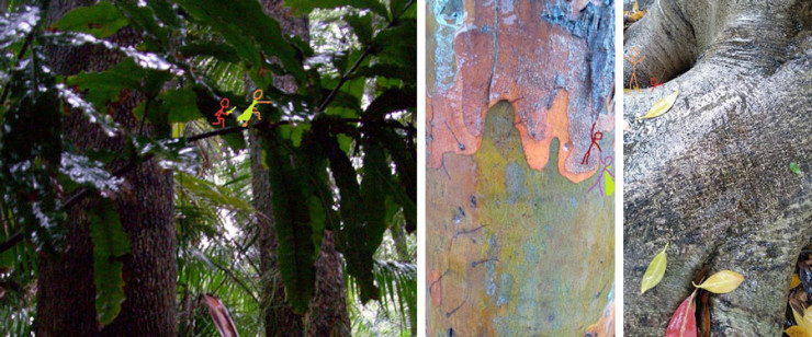 Dyer-Canopy-References