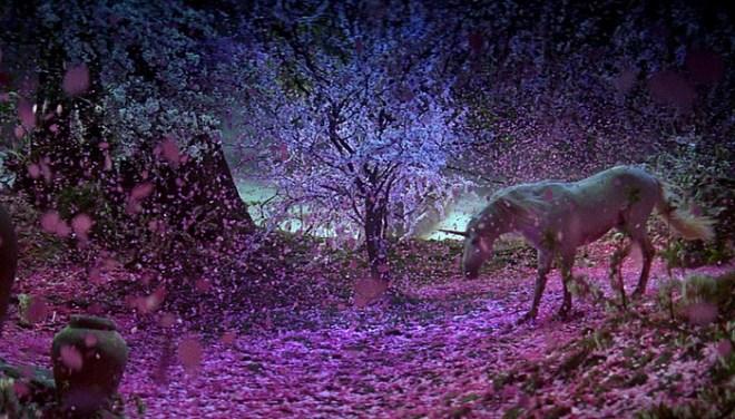 unicorn petals