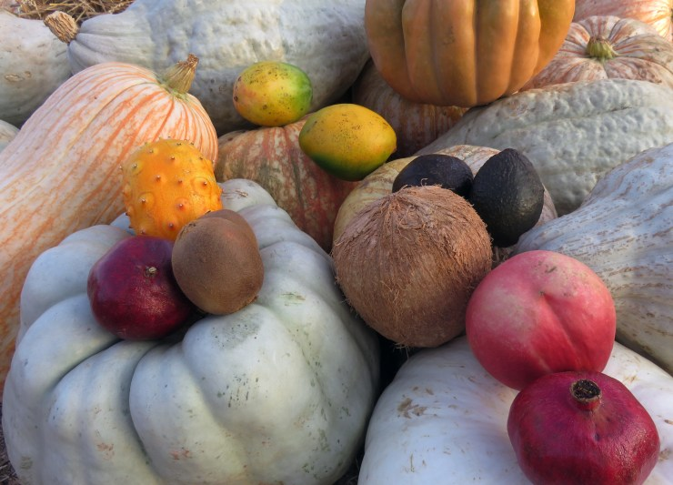 Photo of various gourds and stone fruit