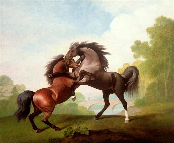 Blog Post Featured Image - Understanding Horses: Horses, Anger, and Letting Go