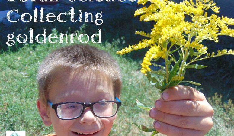 Torah Science – goldenrod