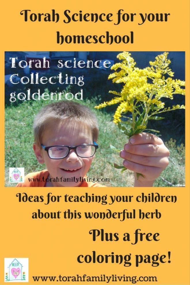 www.torahfamilyliving.com(2)