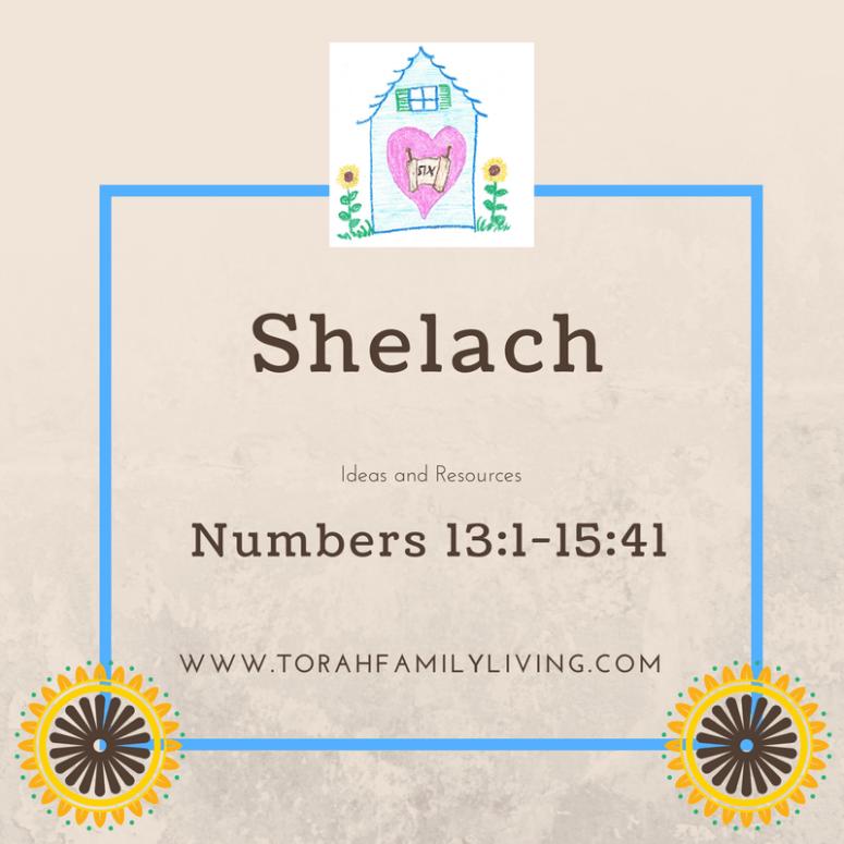 shelach