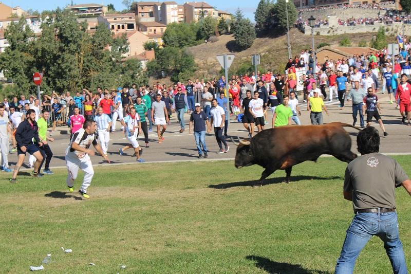 Desestimado el recurso de Tordesillas contra la Junta por el Toro de la Vega