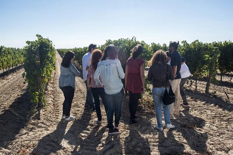 El enoturismo protagoniza la vendimia en la ruta del Vino de Rueda