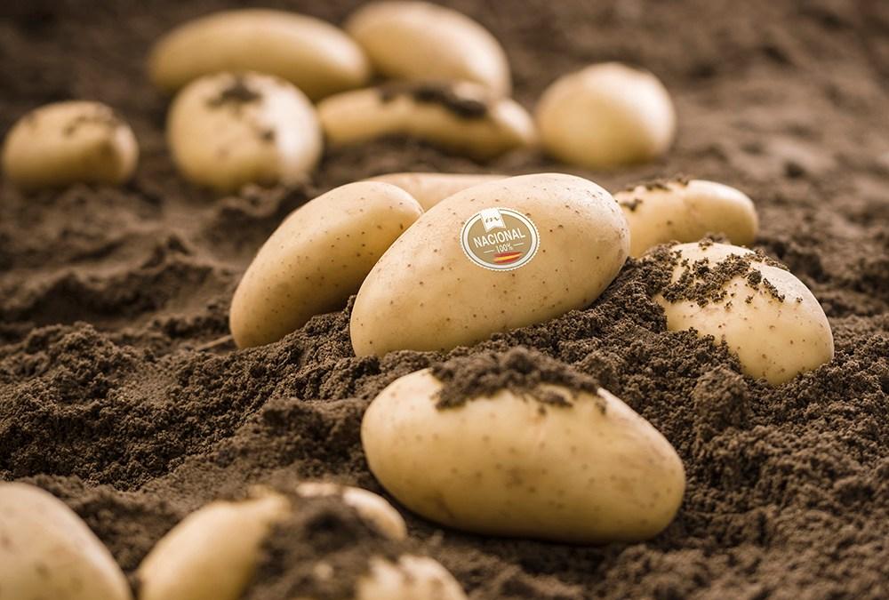 """Patatas Meléndez subraya su apuesta por los agricultores locales en una campaña de patata nueva """"de calidad"""""""